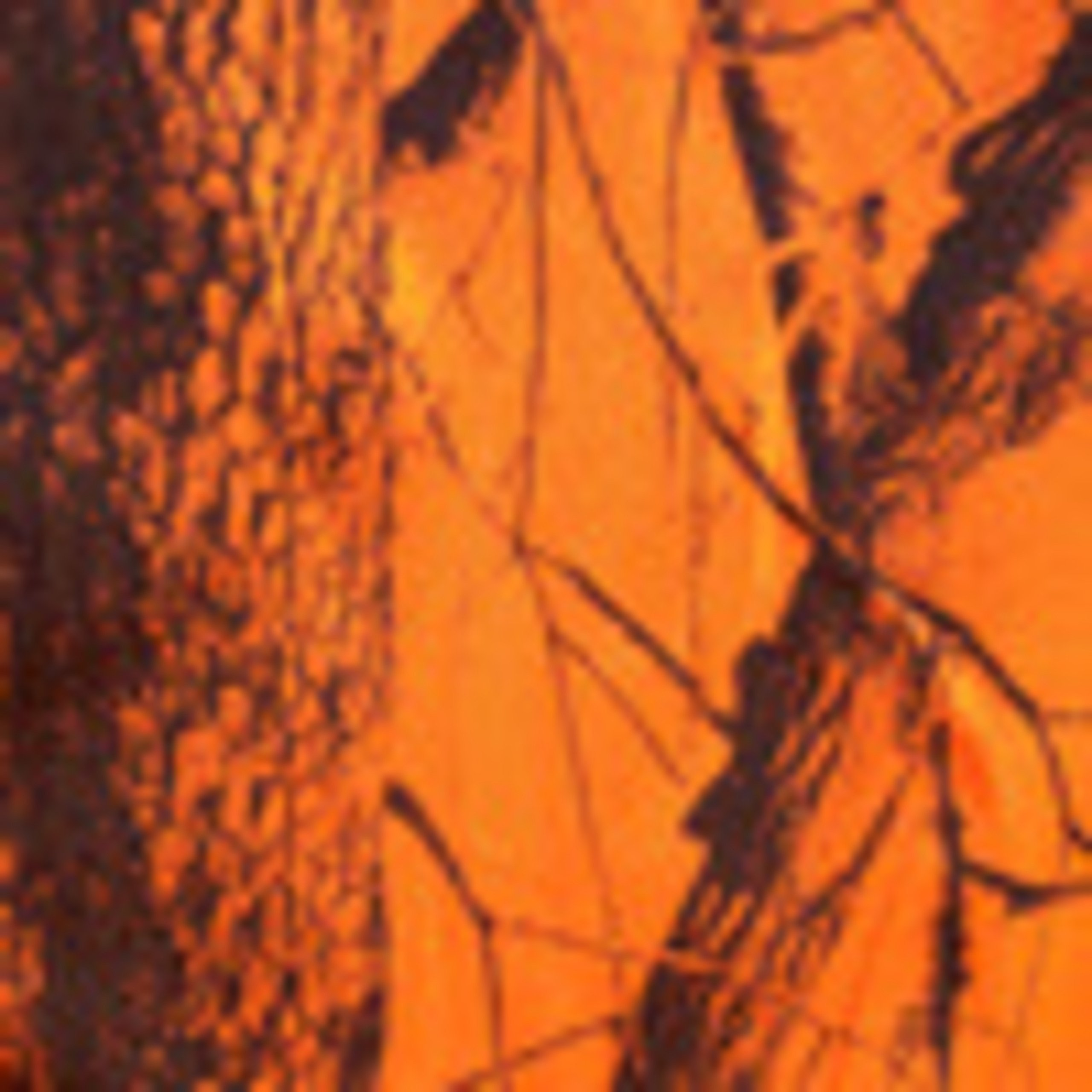 Realtree edge orange camouflage